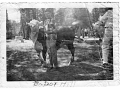 1950-bobby-hill-shows-steer_w