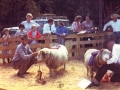 1970s-sheep-show
