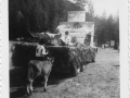boulder-mt-4h-dairy-club-parade-float-1950s_w