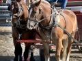 Heavy-Horse-team