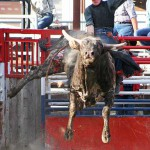 Exciting BCRA Rodeo Action