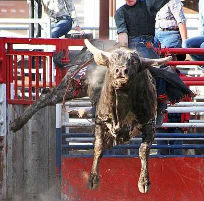 Bull Riding Airborne